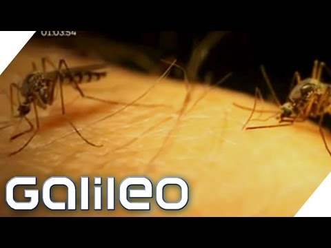 Tipps gegen Stechmücken? | Galileo | ProSieben
