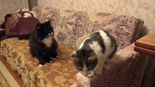 Кот Васька знакомится с бездомным котёнком. Взяли котёнка с улицы