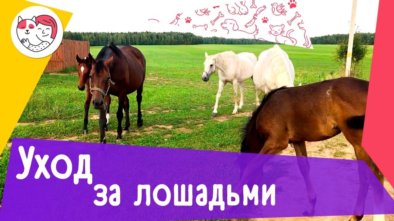 3 особенности ухода за лошадьми