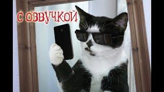 Смешные коты с ОЗВУЧКОЙ от Domi Show - Лучшие приколы МЕМЫ