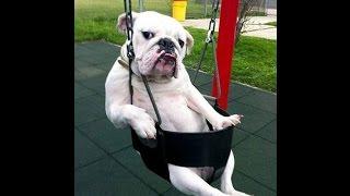 Funny Video Pets Animal | Animal Funny Video HD