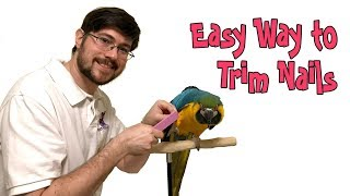 Easiest Way to Trim Parrot Nails