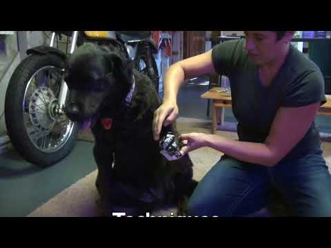 Canine Kinesiology Taping Course Overview - YouTube