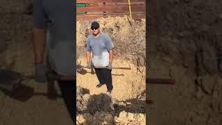 Planting a 40′ Live Oak