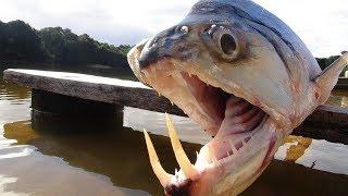 8 ужасающих существ реки Амазонка