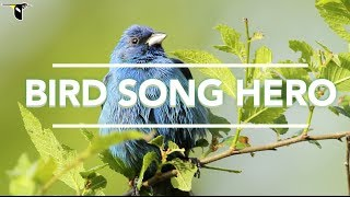 Bird Song Hero: The Song Learning Game For Everyone