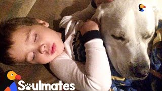 Dog Helps Stop Little Boy From Getting Nightmares | The Dodo Soulmates