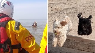 video: Watch: Dogs and owner rescued from sea by RNLI after being stranded by tide change