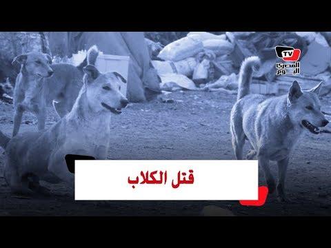 أزمة قتل الكلاب الضالة في مصر (القصة الكاملة)