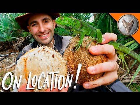 Coconut -