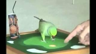 Сообразительные птицы подборка