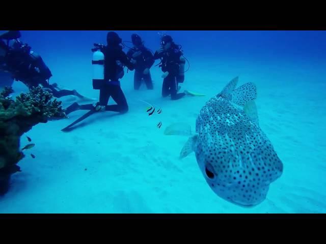 Mauritius Scuba Diving : Lion Reef near Pereybere Beach : 24 June 2016