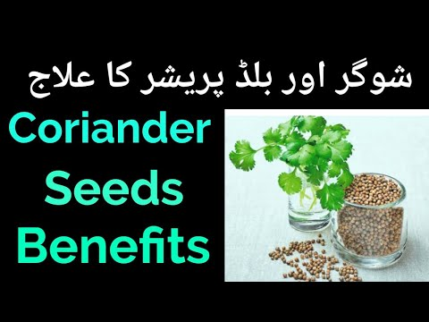 Coriander seed Water benefits urdu | Magical Drink for Weight Loss | dhaniya ke fayde धनिया के फायदे