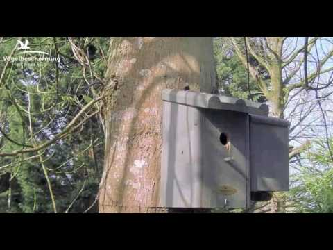 Visiting Nest Box - 24.03.2017