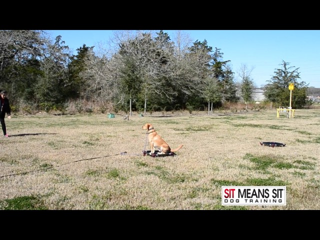 Dog Training College Station TX • Dog & Puppy Obedience Training