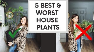 5 BEST & WORST House Plants: The EASIEST Favorites & The Ones That Are The MOST WORK