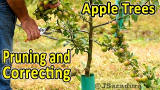 Pruning Apple Trees | Correcting and Training Young Apple Trees | Voice over version