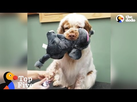 Dog Brings Stuffed Animal To Comfort Her During Grooming + Cute Animal Videos | The Dodo Top 5