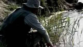 Пеленгас ловля в реке кубань
