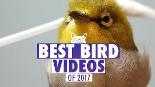 Best Bird Videos of The Year 2017   Pets of 2017