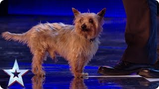 Ant runs scared as Max the dog returns to the BGT stage! | Britain's Got More Talent 2017