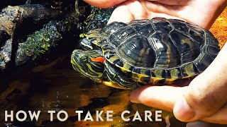 How to take care of a Turtle? 🐢 RED EARED SLIDER