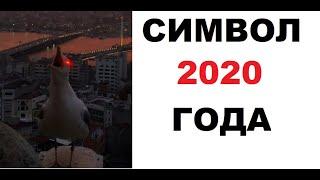 Лютые приколы. Символ 2020 года!