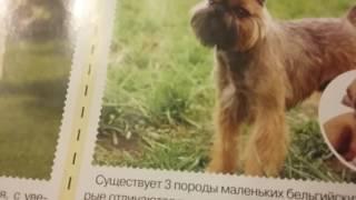 Поо собак