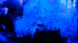 alabardanın çamlarıuluçam köyütavşanlıdurmuş kaplan.3gp