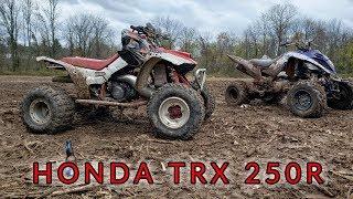 honda trx 250r for sale - Free video search site - Findclip Net