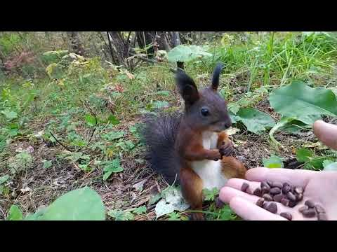 Squirrel Needs to be Rebooted