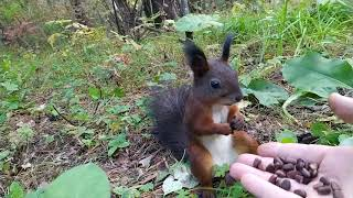 Белочка сломалась/Squirrel broke/そして、リスは本当に壊れました。/Wiewiórka się zepsuła.
