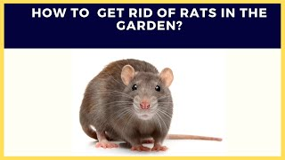 Rats: How to get rid of rats/mice in the garden?