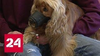 Как из-за неправильного хранения лекарства для животных превращаются в яд - Россия 24
