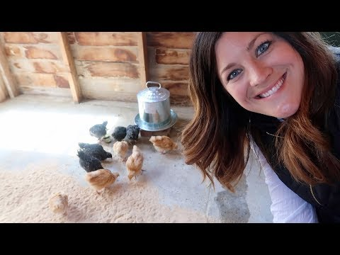 So Excited! My Chickens are Here!!! 🐓😁// Garden Answer