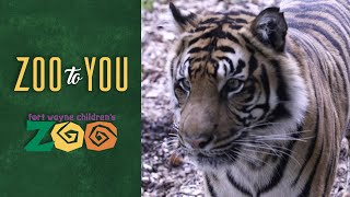 Fort Wayne Children's Zoo: A Day in the Life of a Tiger