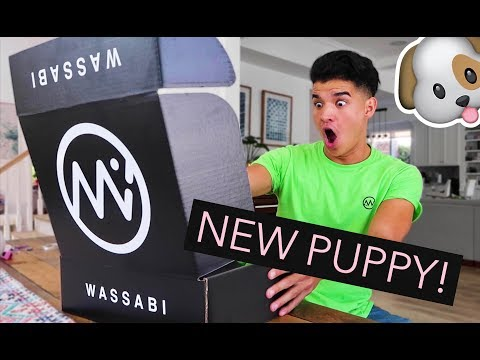 GETTING MY VERY OWN PUPPY + NEW MERCH RELEASE!