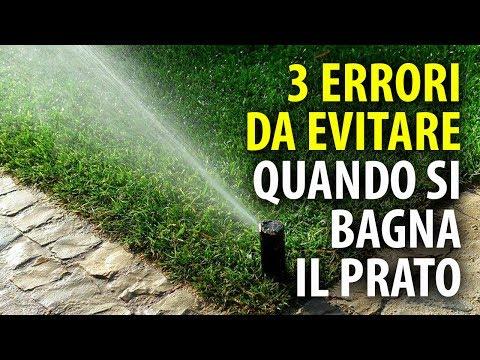 3 Errori da Evitare Quando si Bagna il Prato