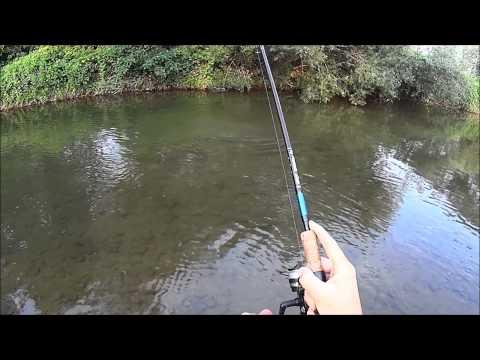 Pesca di som in Belarus