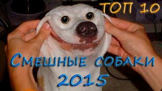 Самые смешные собаки 2015, ТОП 10 смешных собак, подборка 10 самых самых приколов с собаками.