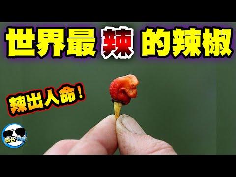 這幾種辣椒你能承受幾種??
