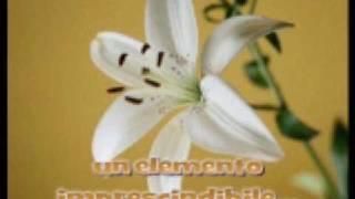 sincerità- Arisa (SANREMO 2009)