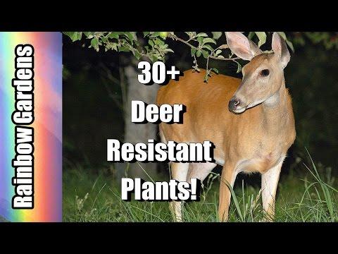 30 + Deer Resistant Plants! Mostly Edible Too! Help Planning Your Deer Resistant Garden Today