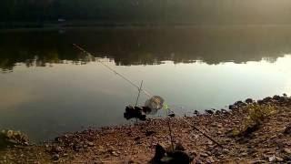 Нарезка из рыбы для ловли сома