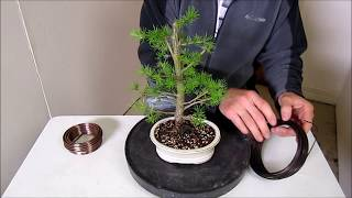 How To Make a Bonsai, Step by Step Beginners Guide To Wiring Trees