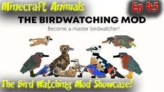 The BirdWatching Mod Showcase Minecraft Animals 60fps 4k HD Ep43