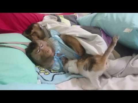Nagmumukha silang mga bulate sa dumi ng tao sa larawan puppy