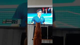 My cat watching Roger Federer on Australian open 2019