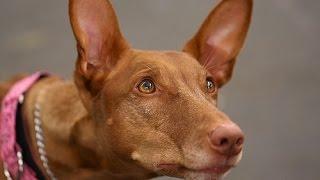 ТОП 10 самых умных собак в мире. Часть 1
