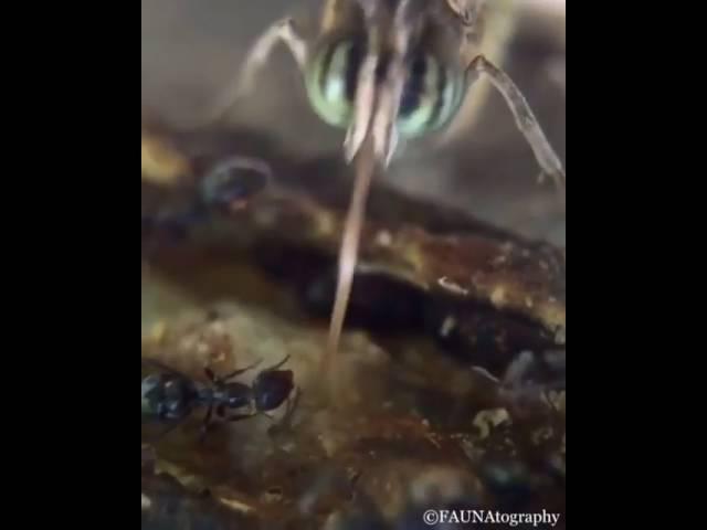 في لقطة نادرة.. نملة تعض لسان الفراشة